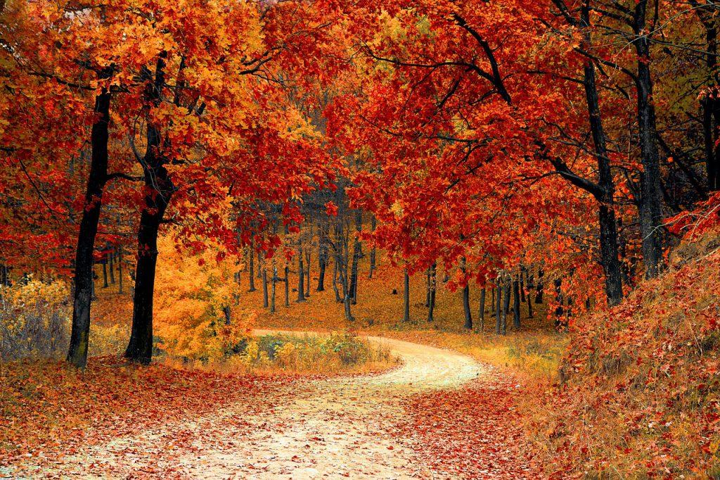 Un chemin qui s'étend dans une forêt que l'automne a rendu d'ocre.